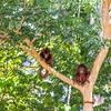 Red Howler Monkeys along the Heath River in Bahuaja Sonene NP, Peru. © Daniel Rosengren / FZS