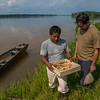 José Antonio Ochoa (right) together with a local fisherman along the Putumayo River near Yaguas. The fisherman is holding a box of young Arowana fish. The arowana fish industry is included in a project hoping to provide locals with a sustainable source of income. this species are mouthbrooders (males keep the egg and young fish protected in their mouths). The Arowana are fished, the younf collected and the adult released again. The young are sold as ornamental fish to the aquarium industry. Peru. © Daniel Rosengren / FZS