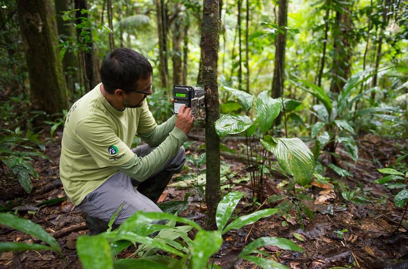 Claus Garcia setting a camera trap in the Yaguas, Peru. © Daniel Rosengren / FZS