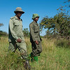 Members of the desnaring team and a TANAPA ranger (with the gun) on their way out in the field to find and collect snares. Grumeti GR, Tanzania. © Daniel Rosengren
