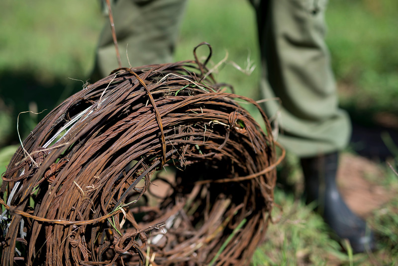 A member of the desnaring team with a roll of collected snares. Grumeti GR, Tanzania. © Daniel Rosengren