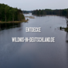 """Filmausschnitt """"Entdecke Wildnis"""" © wildnis-in-deutschland.de"""