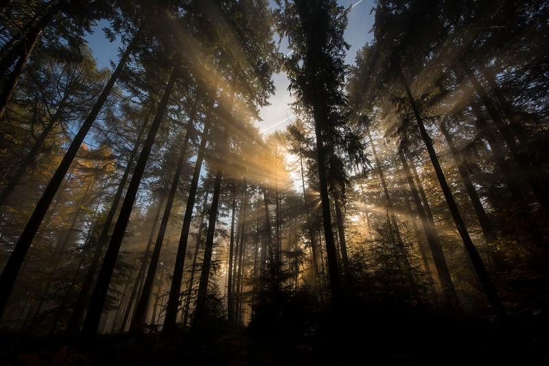 Sun rays in the morning fog in Main-Kinzig-Kreis, Hessischer Spessart, Gussbezirk Spessart, Hessen, Germany. © Daniel Rosengren