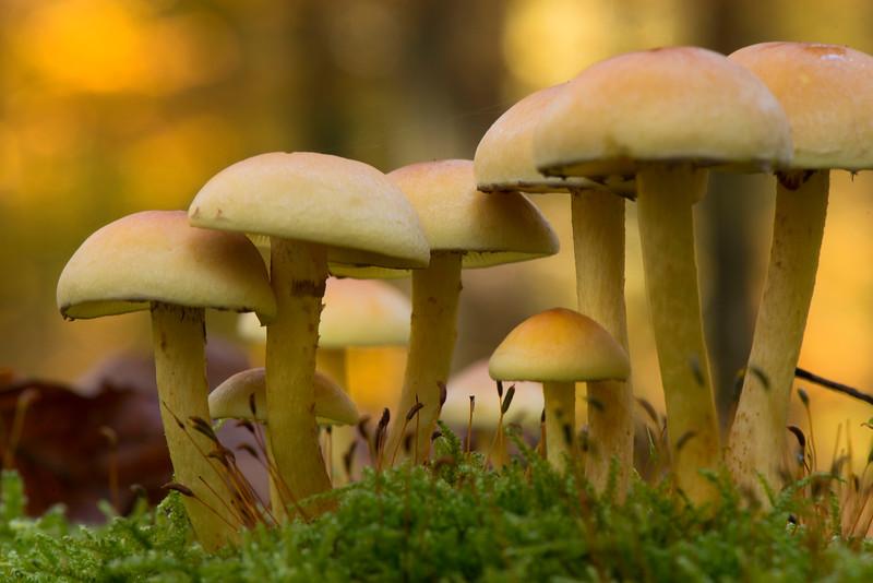Mushrooms in a Beech forest in Alsberg, Hessen, Germany. © Daniel Rosengren