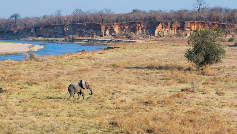 An elephant seen from the FZS Husky plane over North Luangwa, Zambia. © Daniel Rosengren