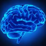 WSU to Teach Children About Brain Health