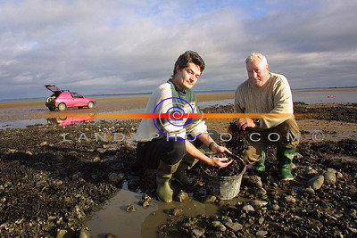 Neil and Pat Maher of Ballybunion , on the strand picking perriwinkels and sea grass, for sale internationaly on the own Web page. Pic Berendan Landy Pic For att of Deirdre