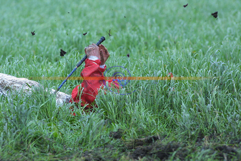 Tralee Jockey Phill Enright lies burried in grass as mud still flies around him after taking a heavy tumble in the big race at the Ballybunion races.<br /> pic Brendan Landy