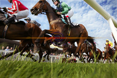 A Mouse's view of teh action from the Opening day of the Listowel Festival Meeting of racing . Pic Brendan Landy