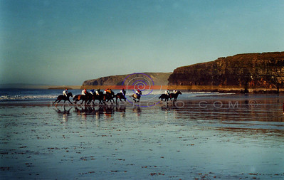 Into the mist Pony racing on the beach in Ballbunion this week as the tide goes out. Pic Brendan landy