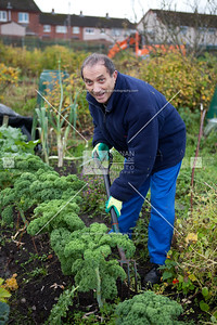 Brendan Farry harvests his broccoli.