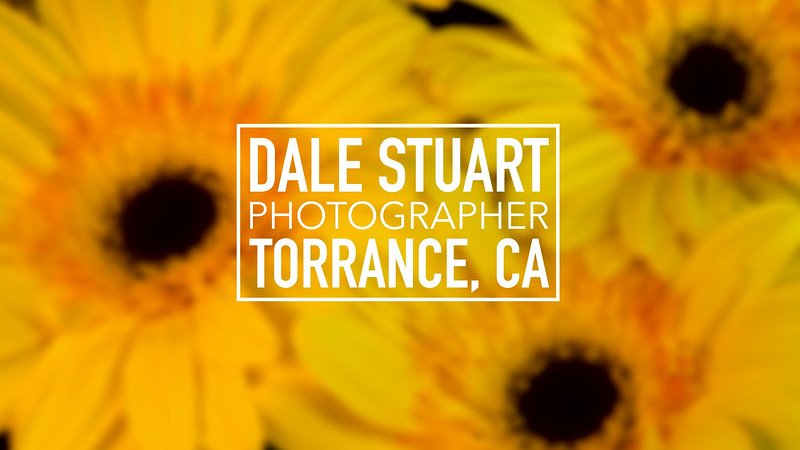 Artist Profile of Dale Stuart - Video for Fiilex Lighting by Andrew Harris