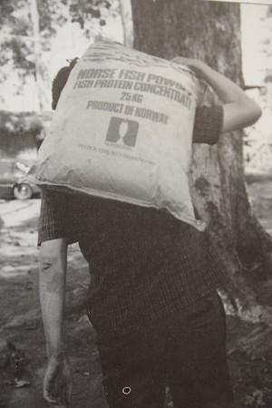 Flyktningerådet deler ut store mengder finskemel til flyktninger i Thailand. (Foto: Flyktningerådet/Tove Bjerkan 1979)