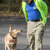 Photo by Greg Eans, Messenger-Inquirer.com/geans@messenger-inquirer.com<br /> <br /> Terry Settle, a member of the Daviess County Search and Rescue Team, works with his yellow lab, Pepper, on Nov. 11 during a training exercise and team photograph at Yellow Creek Park.