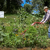 """Tommy Claypool tills the ground in his wildflower garden he and his wife, Milly, maintain together at their home on Newbolt Road, Wednesday, July 11, 2018, in Daviess County, Ky. The garden contains sunflowers, zinnias and other wildflowers that they have planted for their community. """"Anybody who wants the flowers can come and take them,"""" Claypool said. """"They are free."""" (Greg Eans/The Messenger-Inquirer via AP)"""