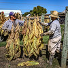Hanging tobacco
