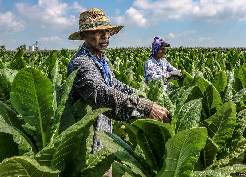 Topping tobacco