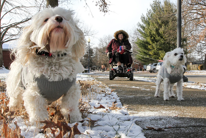 "Photo by Greg Eans, Messenger-Inquirer.com/geans@messenger-inquirer.com<br /> <br /> Janet Whitaker strolls along Quail Ridge Court, taking her two dogs, Chloe, left, and Chichon, on a walk in the frigid cold weather. ""I just bought them these new sweaters for the cold weather,"" Whitaker said."
