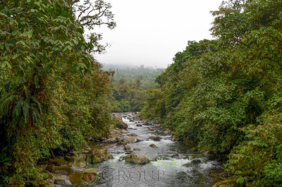 The pristine waters of Rio Manduriacu and the surrounding cloud forest habitat for the Tandayapa Andean Toad (Andinophryne olallai) and other threatened species.