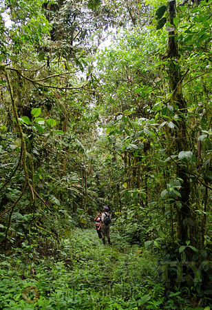 Two members of the research team who rediscovered the Tandayapa Andean Toad (Andinophryne olallai) search the cloud forests of Manduriacu for other potentially threatened species.