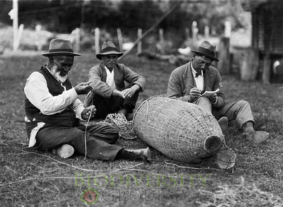 Historian, Peter Buck, studying Paratene ngata making an eel basket, ca 1922. Courtesy Alexander Turnbull Library.