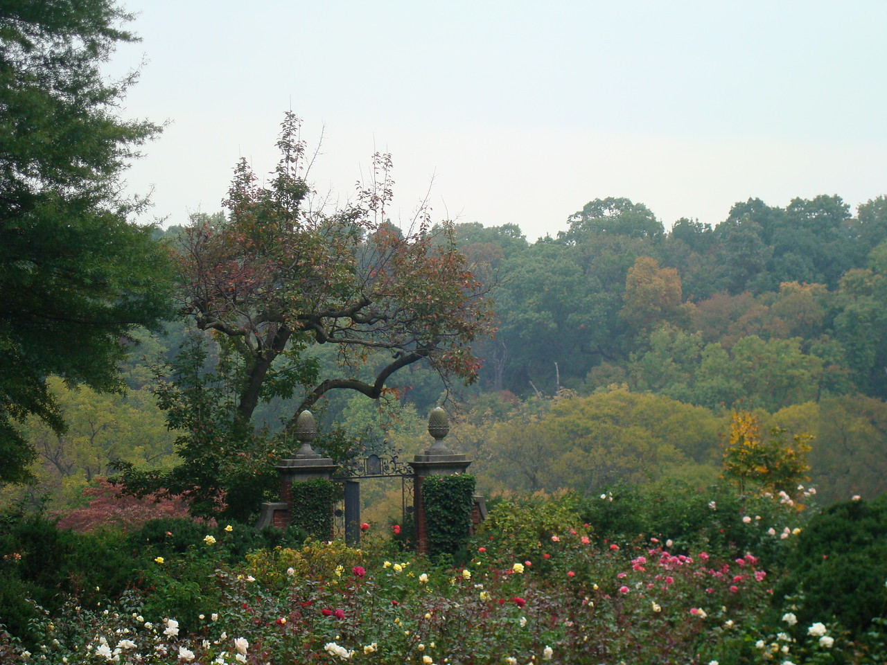 Looking out over the Rose Garden of the Dumbarton Oaks Gardens toward the trees of Dumbarton Oaks Park beyond