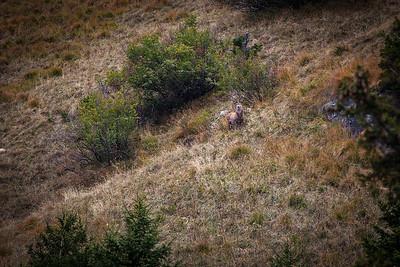 Rheinwald-Flora-Fauna-Sujets-D-Aebli-052