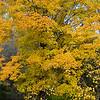 backyard_woods_p2.jpg