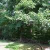 back_yard_woodpile.jpg