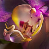 Orchid 512