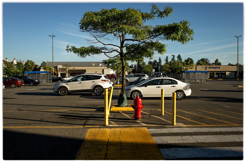 Trenant Park Ladner parking lot - view from London Drugs looking south