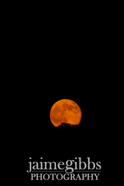 "The ""Super"" Moon rising - July 13, 2014<br /> <br /> If you like my photos, please take a moment to ""like"" Jaime Gibbs Photography on Facebook and share with your friends. Also, remember to select ""Get notifications"" under the ""Like"" drop-down box. Thanks so much!!!"