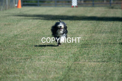 poodleclub (744 of 2199)