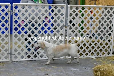 greenvileebarnhunt (20 of 419)