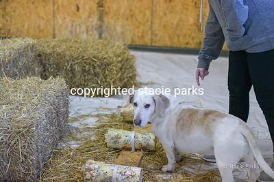 greenvileebarnhunt (8 of 419)