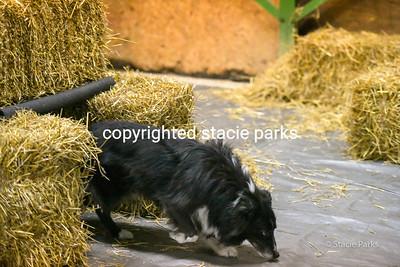 greenvileebarnhunt (26 of 419)