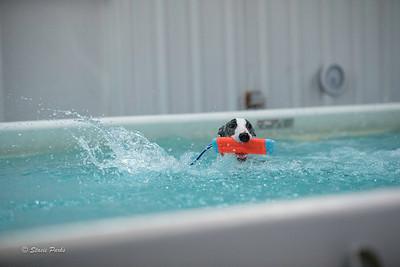 splashyourpup-13