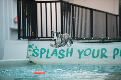 splashyourpup-17