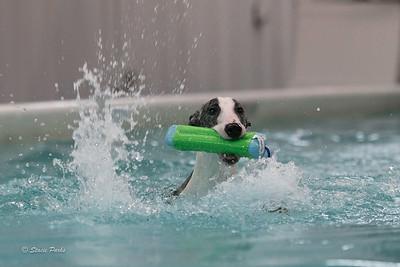 splashyourpup-16