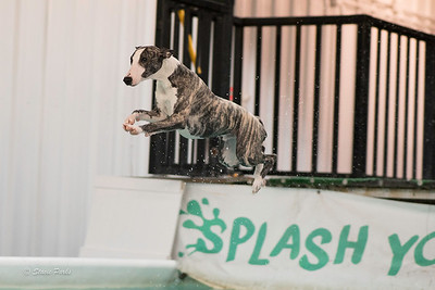 splashyourpup