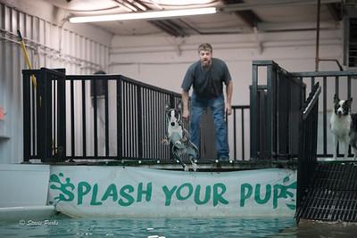 splashyourpup-22