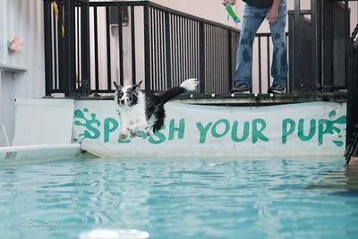 splashyourpup-2