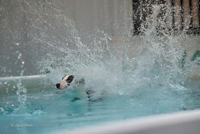 splashyourpup-11
