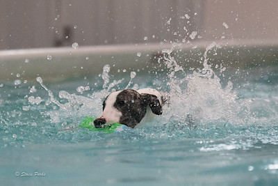 splashyourpup-15