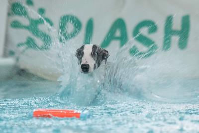 splashyourpup-18