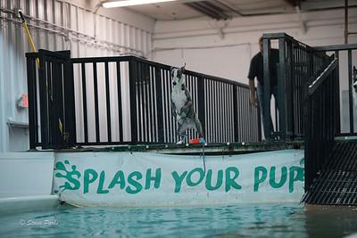 splashyourpup-14