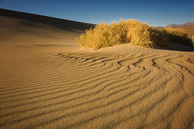 Mesquite Flats Dunes
