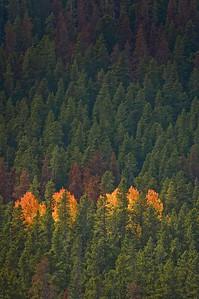 Fall's Glow