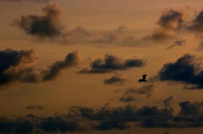 Pelican Adventures - Tybee Island