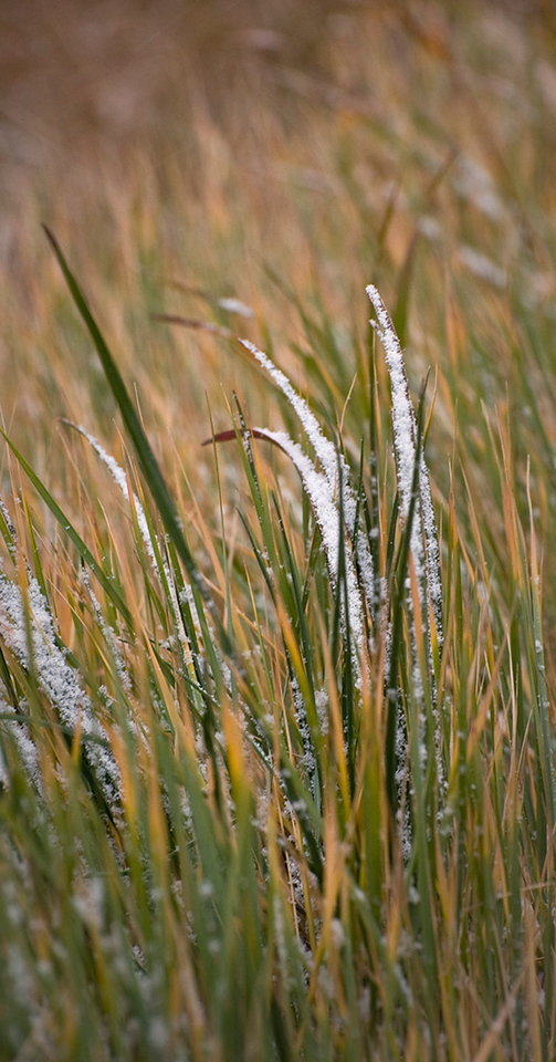Grass Detail - Gros Ventre Road